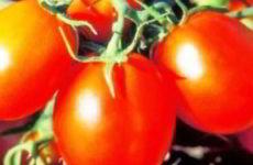 Когда сеять семена помидор на рассаду в 2018 году в Подмосковье
