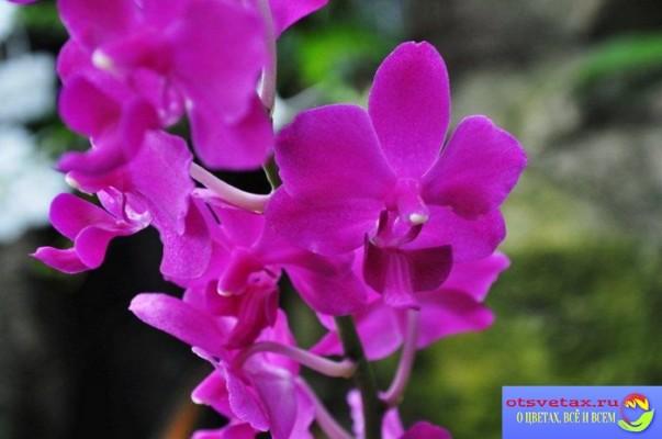 растение орхидея фото