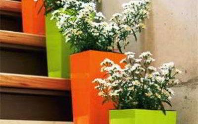 Как расположить цветы в интерьере правильно