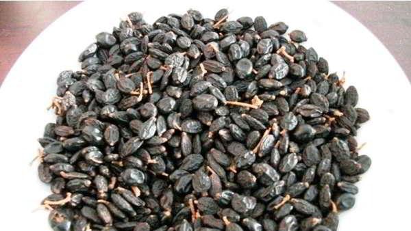 размножение гортензии в сибири семенами