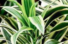 Топ 7 – самые легкие в уходе комнатные растения