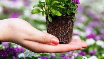 Какие многолетние, однолетние цветы нужно сажать на рассаду в марте