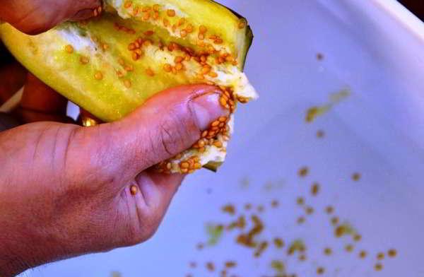 Нужно ли замачивать семена баклажан перед посевом