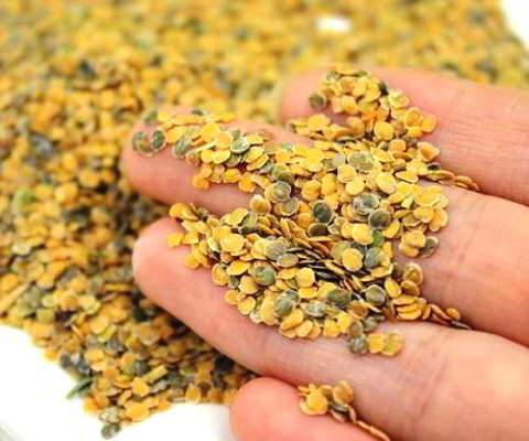 маттиола выращивание из семян