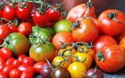 Самые урожайные сорта томатов на 2018 год семена для теплицы, открытого грунта в регионах
