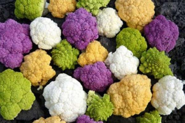 цветная капуста выращивание и уход в открытом грунте