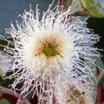 неприхотливые цветущие комнатные цветы фото