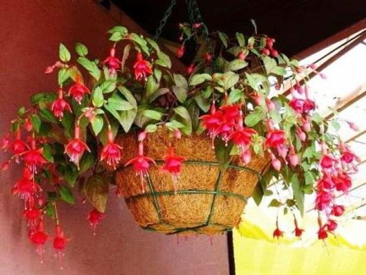 комнатные растения фото с названиями цветущие уход