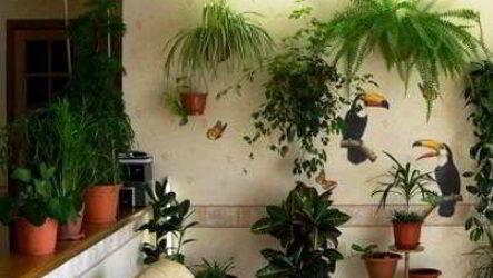 Как правильно разместить комнатные цветы в интерьере квартиры