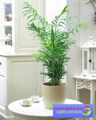 комнатные цветы в квартире дизайн фото хамидорея