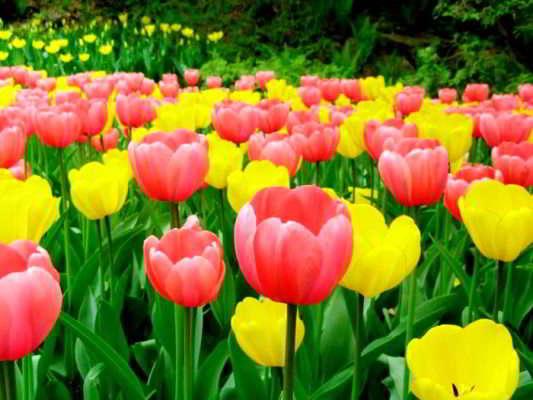 лучшие многолетники длительного цветения