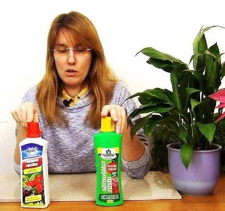 Чем подкармливать спатифиллум в домашних условиях