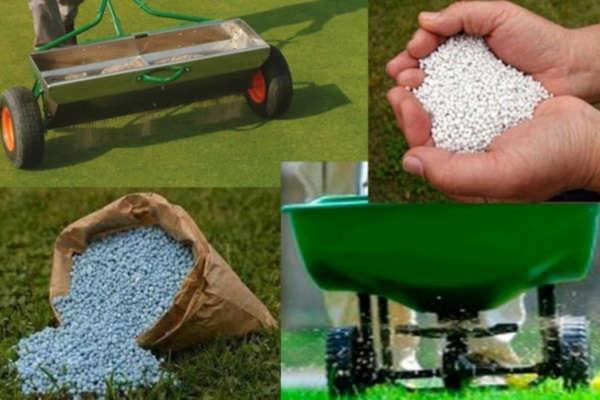 как сажать газонную траву своими руками в июне