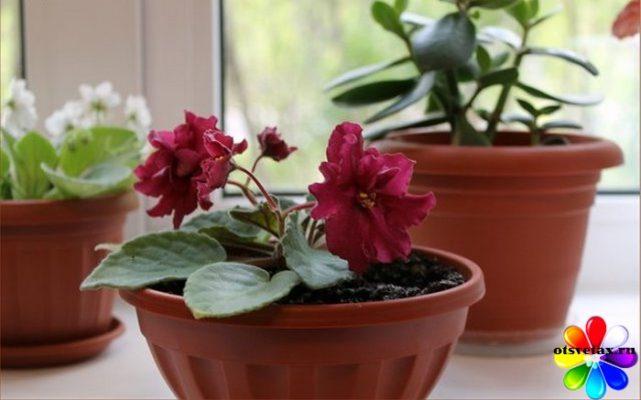 уход за комнатными цветами зимой фото