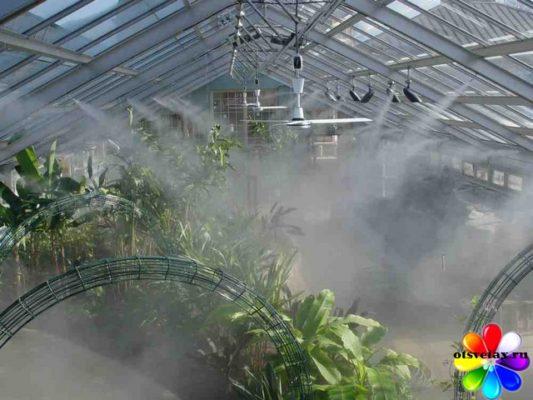 влажность воздуха для комнатных цветов1