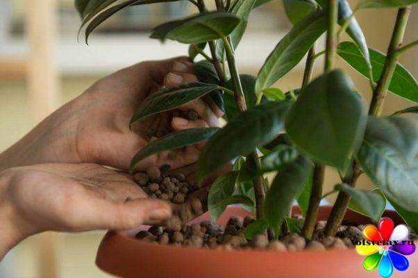 влажность воздуха и комнатные растения
